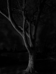 Spooky Tree (World-viewer) Tags: landscape street quirky mystical magic iphone8 iphone spooky arboreal tree mono monochrome bw blackandwhite abstract art surreal artistic