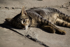 Thailand-5046 (Andy Kaye) Tags: thailand siam chiang rai thai asia east northern cat gat gato