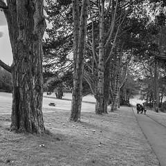 Cabinteely park ~ HMBT (Wendy:) Tags: mono trees cabinteely park crocus bench path hmbt