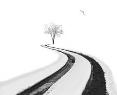 """Leading lines"" (Arshad Aashraf) Tags: snow tree images beautiful fineart arshadashraf pakistan winter beautyofnature details netgeo flicker thanksflicker naturallight beautyinnaute"