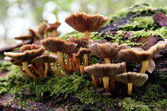 Paddenstoelen (DirkVandeVelde back , and catching up) Tags: europa europ europe belgie belgium belgica belgique buiten antwerpen anvers antwerp mechelen malinas malines vrijbroekpark flora funghi paddenstoel champignon schimmel mushroom sony