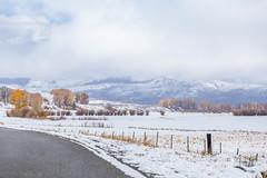 Early Snow Near Gunnison, Colorado, USA (Geraldine Curtis) Tags: snow gunnison colorado usa skiresort crestedbutte october fallcolours yellow gold firtrees mountain