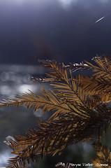 """""""blue note"""" (Grozibou38) Tags: arbres automne trees automn couleur bleu blue boulieu rhônealpes isère nikond90"""
