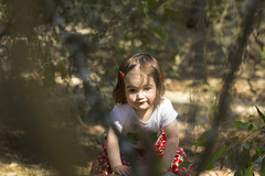 exploring (louisa_catlover) Tags: maranoa maranoagardens garden park nature outdoor afternoon spring november balwyn melbourne victoria australia canon 60d 100mm macrolens portrait family child toddler daughter tabitha tabby bokeh dof