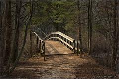 The Bridge (scottnj) Tags: 365the2018edition 3652018 day321365 17nov18 bridge woods path 365 scottnj scottodonnellphotography trees 365project abigfave