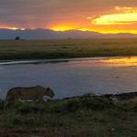 African Sunset, Amboseli National Park thumbnail
