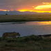 African Sunset, Amboseli National Park