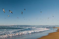 Blue water, blue sky (Hanna Tor) Tags: ocean sky wave sea landscape seascape water blue california beach shore shoreline birds flight wings wild wildlife hannator nature sand sunset seagulls mountains