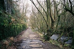 The tram way along the Taf Fechan (knautia) Tags: merthyrtydfil wales uk january 2019 footpath film ishootfilm olympus xa2 olympusxa2 fuji superia 400iso naturereserve tramway h taffechan rivertaff