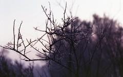 zenit 19-helios 44m2048 (Fabio.Buoso) Tags: mare nebbia alba caorle venezia italia zenit 19 film camera analogic
