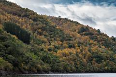 Riveira Sacra (Lagier01) Tags: españa lugo ribeirasacra viajes bosque paisaje landscape otoño
