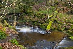 Overtoun Burn (Joe Son of the Rock) Tags: footbridge overtounburnovertoun bridge waterfall overtounestate dumbarton autumnleaves tamronsp2470mmf28divcusdg2a032