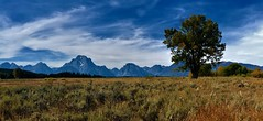 LONE TREE STANDING (The VIKINGS are Coming!) Tags: tetons mountains wilderness elk grassland grazing fallcolors autumn wyoming jackson