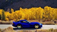 Dodge Viper GTS (obscure.atmosphere) Tags: sonnenschein sonnenlicht licht light ligero lumiere sunlight sunshine sunny sonnig natur nature naturista naturaleza wald forest bosque selva foret woods blätter leaves baum bäume tree trees road strase street ps4 playstation 4 gt sport gran turismo dodge chrysler us usa american muscle car auto automobile supercar sportcar hypercar exotic automobil sportwagen coche carro automovil deportivo voiture srt viper gts herbst autumn otono automne 秋 가을 laub foliage espe aspe espen aspen zitterpappel quaking chrome wheels