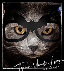 Batcat (tatianalovera) Tags: black glasses occhiali pipistrello bat occhi eyes animale animal felino gatto cat