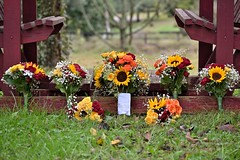 8E43722E-31AD-45B3-AC84-2589B5B09D4F (Aprilhuntwithacamera) Tags: bouquet wedding swing sunflowers roses babysbreath flowers details floral bridesmaids decor grass outdoors tennessee fall