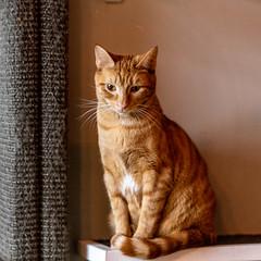 javacatscafe12Jan20190163.jpg (fredstrobel) Tags: atlanta georgia unitedstates us javacafecats javacatscafe places animals ga pets cats usa