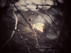 Spark (J.C. Moyer) Tags: color colour woods forest branches leaf flora gx80 panasonic lumix nature rustic
