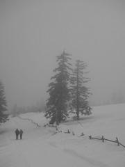 walk in the snow (5) (mgheiss) Tags: sony rx100 snow fog schnee nebel schwarzwald blackforest