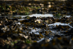 Seaweed jungle  -  (Selected by GETTY IMAGES) (DESPITE STRAIGHT LINES) Tags: landscape nikon24120mmf4 getty gettyimages gettyimagesesp despitestraightlinesatgettyimages paulwilliams paulwilliamsatgettyimages nikon24120mmf4gedvr bay seaside sunrise thegoldenhour goldenhour magichour themagichour broadstairs kent england coast coastline coastal tide tidal water sea sunlight nikon d850 nikond850 nikkor24120mm nikon24120mm nikongp1 manfrotto vikingbay vikingbaybroadstairs sunlightovervikingbay vikingbaykent vikingbayinbroadstairs viking vikings seaweed ilobsterit