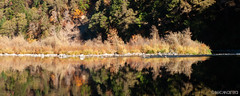 Upside Down (Nick Kanta) Tags: autumn color d90 nikon oregon outdoorphotography pano panoramic reflection river rocks rogueriver tamron1750 trees water