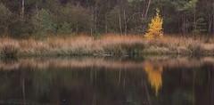 Brandeveen - Holtingerveld (henkmulder887) Tags: holtingerveld brandeveen natura2000 drenthe zwdrenthe ven vervening turfvaartje water reflectie weerspiegeling herfst