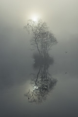 Little island (Keartona) Tags: island trees cormorant fog foggy morning dawn winter tranquil beautiful nature natural symmetry reflections lake etherowcountrypark december branches bird england stockport compstall sun mist glow