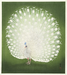 Peacock (1925 - 1936) by Ohara Koson (1877-1945). Original from The Rijksmuseum. Digitally enhanced by rawpixel. (Free Public Domain Illustrations by rawpixel) Tags: pdproject21batch2x otherkeywords tagcc0 animal antique art asian bird drawing illustration japan japanese koson museum name ohara oharakoson old paint peacock rijksmuseum vintage