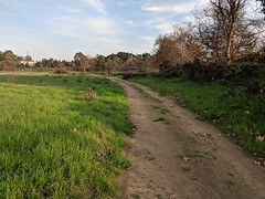 Not a country road (1/2) (Kelson) Tags: california madronamarsh marsh nature hike southbay torrance plants trees road dirtroad