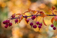 Riverside Park (Westsideguy) Tags: autumn riversidepark