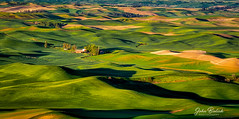 Palouse Farm Land_02 (John Bielick) Tags: 2018 america colfax copyrighted johnbielick northamerica palouse park photogtrekker statepark steptoebuttestatepark thestates theunitedstates us usa unitedstates unitedstatesofamerica washington whitmancounty farmland field rolling hill green farming scenic
