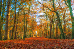 Richting Belvedere (johan wieland) Tags: 2018 autumn fall herfst leyduin najaar vogelenzan vogelenzang northholland netherlands nl
