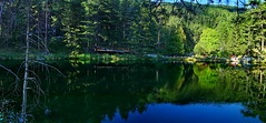 Green mirror in water (meren34) Tags: reflection green forest water lake mirror