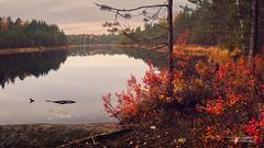 Autumn calm (Joni Salama) Tags: lampi vesi luonto nuuksio syksy panorama espoo suomi kattila vihti uusimaa finland fi pond water nature autumn fall landscape