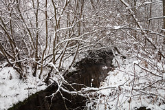 Creek in the Snowy Forest (Digikuvaaja) Tags: finland background birch branch christmas cold day dreamy forest frost ice landscape nature peaceful season snow snowy tree trees trunk white winter winterforest wintertime wintry wonderland woods hämeenlinna tavastiaproper fi