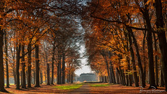Maison Moët - Parc Broekhuizen (BraCom (Bram)) Tags: 169 bracom bramvanbroekhoven holland leersum nederland netherlands parcbroekhuizen utrecht utrechtseheuvelrug autumn bladeren bomen boom estate fall fog foliage gebladerte gras grass herbst herfst house huis laan landgoed landscape landschap lane leaves mist nevel park schaduwen shadows sky tree trees widescreen maison moët maisonmoët natureinfocusgroup
