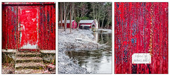 Blairs Boathouse (Stoates-Findhorn) Tags: 2018 paint scotland moray lochofblairs forres triptych boathouse winter ivy frozen unitedkingdom gb