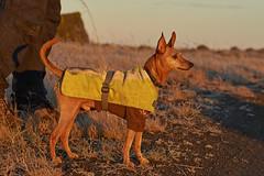 24-november-kotlugengi-rockville_017 (Stefán H. Kristinsson) Tags: venus kötlugengið nikond800 nikon70200f4 reykjanes winter november 2018 iceland vetur sunset red dog dogs hundur hundar