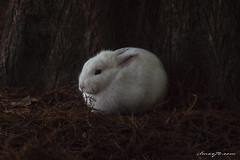 Coniglietto (ilMax72.com) Tags: ilmax72 fotografia foto photo photography art arte animali animales coniglio