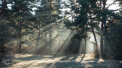 Light (judithrouge) Tags: light lightbeam rays raysoflight trees park morninglight morningmood december sun hoarfrost licht lichtstrahlen lichtstimmung morgenstimmung morgennebel diesig wetter weather dezember sonne raureif bäume germany deutschland