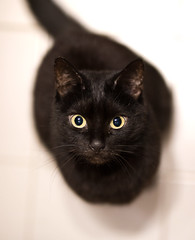 Lilli (rengawfalo) Tags: lilli black schwarz katze tier haustier animal cat pet augen auge eyes kitten