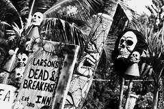 Halloween screaming tiki (Peter Szasz) Tags: maui hawaii kihei haunt skull skeleton blackwhite black monochrome sign tiki palm pacific tree spooky scary celebration festivity halloween dead undead travel grim grainy breakfast scream tropical