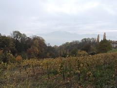 DSCN8092 (keepps) Tags: switzerland suisse schweiz vaud brent fall autumn landscape fog vineyard