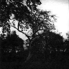 Old apple tree (Rosenthal Photography) Tags: washiw25 rolleiflex35f winter tetenaleukobrom1120°c3min 6x6 schwarzweiss ilfordrapidfixer asa25 bäume 20181205 pflanzen epsonv800 mittelformat städte ff120 anderlingen analog landschaft dörfer siedlungen appletree landscape dark darkness daysofdarkness tree rollei rolleiflex 35f f35 75mm sk schneiderkreuznach xenotar washi film washiw tetenal eukobrom 11 epson v800 december