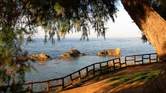 sea view from Vasileos Georgiou Park in Chania IMG_4506 (mygreecetravelblog) Tags: greece crete greekisland greekislands island chania hania xania city town vasileosgeorgiouparkchania vasileosgeorgioupark park townpark tree aside coast seafront water sea