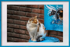 Cat at the stable (gill4kleuren - 17 ml views) Tags: pussy puss poes chat mieze katje gato gata gatto cat pet animal kitty kat pussycat poezen