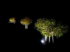 Lit Trees (EmperorNorton47) Tags: portolahills california photo digital winter night nightphotography lit trees garden