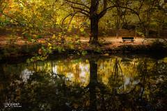 NATSUKASHII (Valero-Xixona) Tags: otoño oscuridad montaña valero hojas canon colores