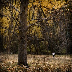 .Ѱ..°. (*BegoñaCL) Tags: autumn wood tree woman 1 forest leaf yellow nature begoñacl