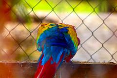 colors (4602_RZZy) Tags: honduras birds colors